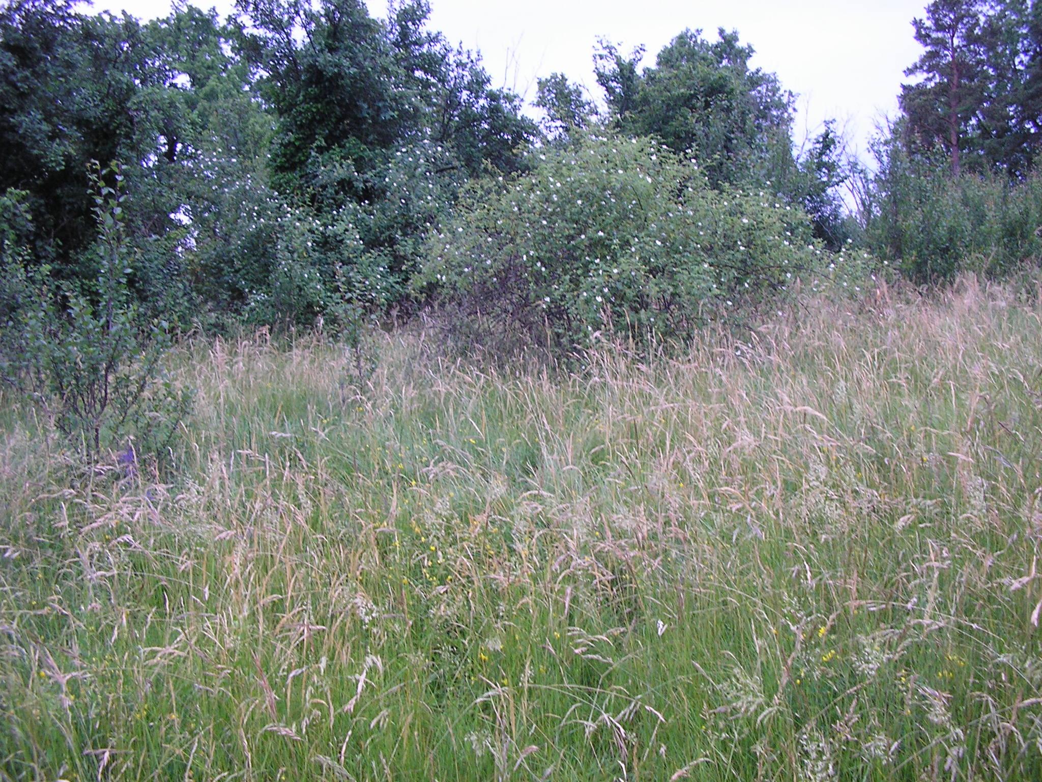 notre terrain au naturel...
